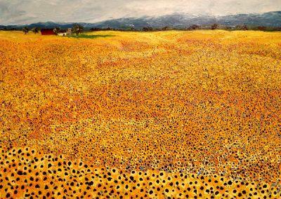 clint-eccher-knobhill-sunflowers